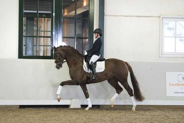 EDS presents KWPN approved stallions