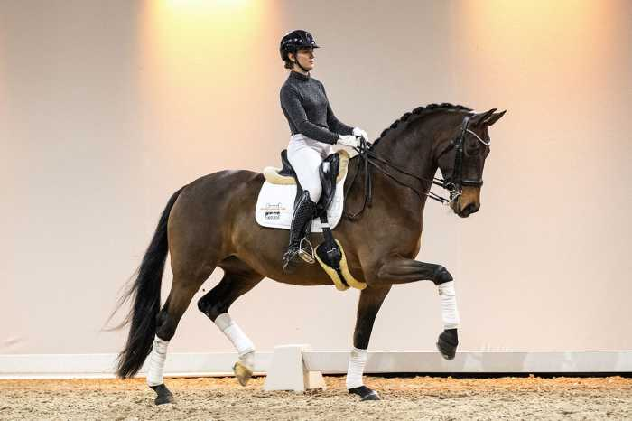 Horses for international sport for sale during Excellent Dressage Sales
