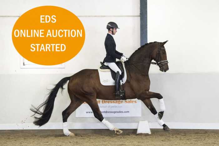 EDS online auction started