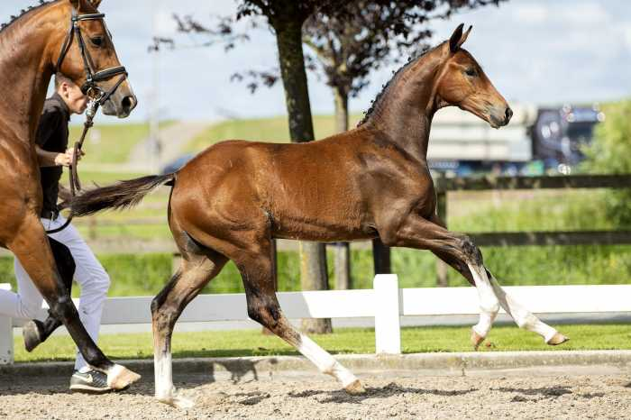 EDS foal auction switch to an online auction