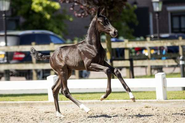 Throwback: Top foals of the EDS-Prinsenstad foal auction 2019