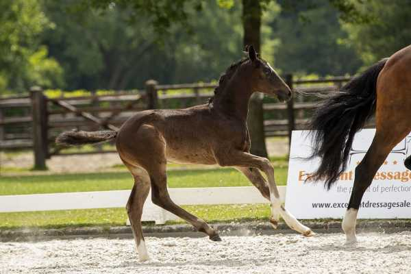 The first foals of the EDS- Prinsenstad foal auction are online!